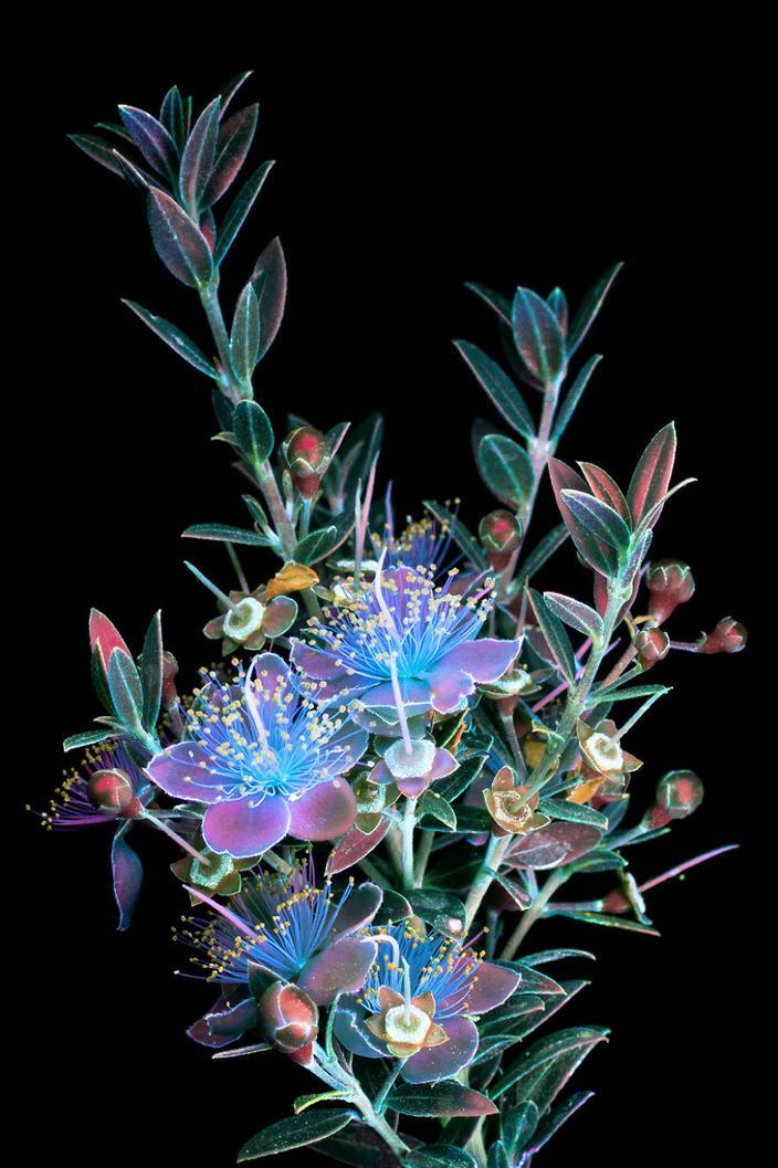 Я сфотографировал невидимый свет, который излучают растения