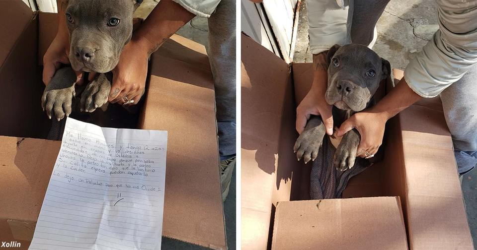 12 летний мальчик отдал любимого щенка в приют, чтобы защитить его от жестокого отца