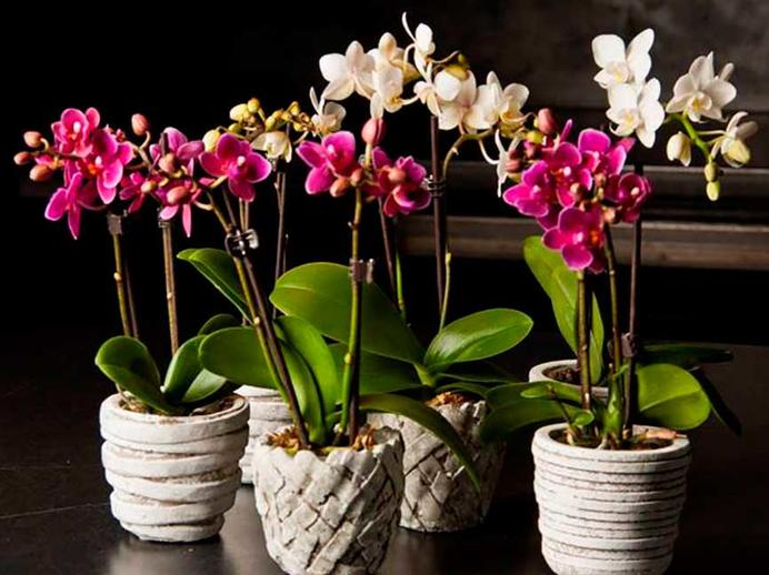 Сосед подсказал, чем поливать орхидеи: удобрения больше не покупаю