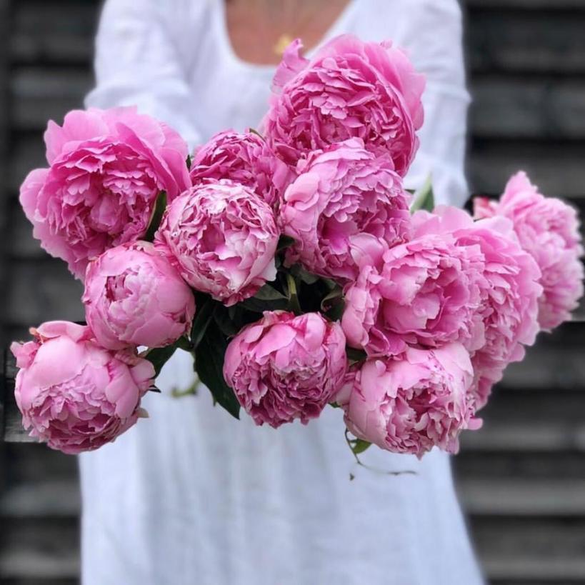 Скоро закончится зима – пришла пора сменить уход на более весенний: готовим розовый скраб для тела  Пионы