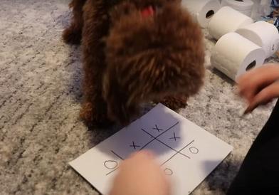 Хозяин решил сыграть со своим псом в крестики-нолики: поражения он не ожидал (видео)