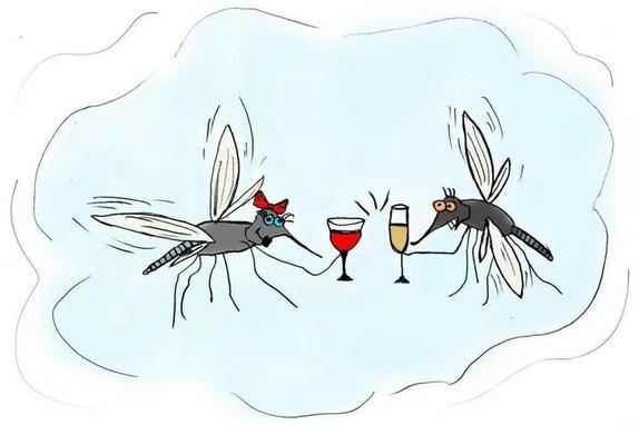 Начался сезон мух и комаров: делаю от них недорогое и эффективное средство из трех ингредиентов