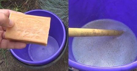 Березовая смола и дегтярное мыло. Как избавиться от муравьев и тли в теплице и на огороде
