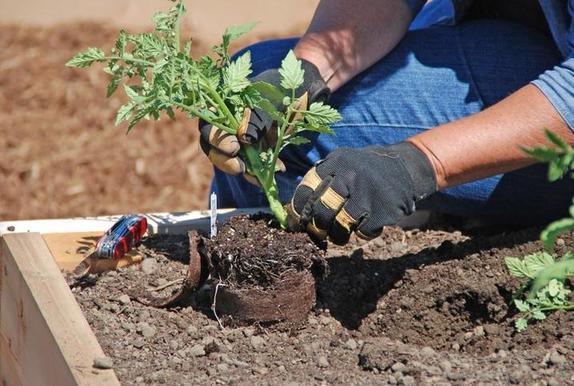 Когда в июне сажать огурцы, картошку, морковь, лук и другие овощи? Благоприятные дни