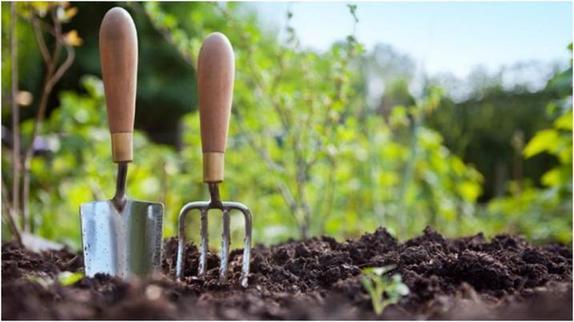 Энотера, книфофия и лихнис: три растения, которые не оставят равнодушным ни одного садовода любителя