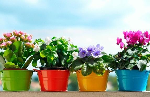 В начале июня благоприятные дни для пересадки. Лунный календарь для комнатных растений на июнь 2020