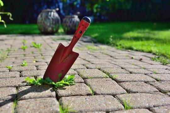 Чистка глиняных горшков, садового инвентаря и не только: много полезных дел, которые я делаю в саду с уксусом
