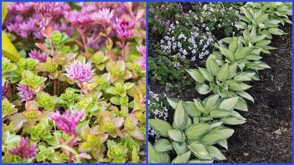 Посадил и забыл: садовые растения, которым не требуется никакого ухода (от лилейников до седумов)