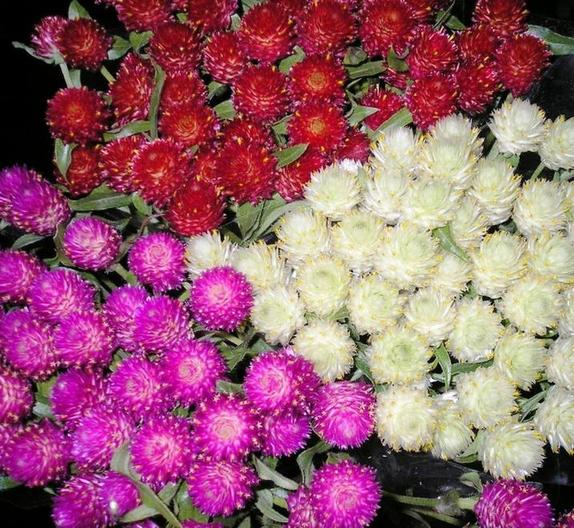 Соседка сушит цветы на зимние букеты, восхищая своими композициями. Как и какие цветы лучше использовать для этого