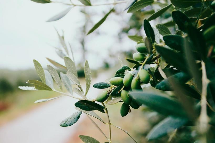 Оливковое масло на кухне и в косметичке: дерматолог назвал 9 преимуществ его использования для кожи