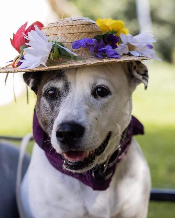 Приют для животных наряжает собак в пожилых людей, чтобы помочь им найти любящую семью