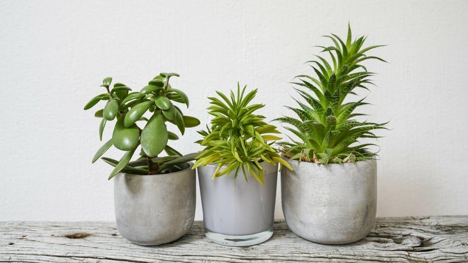 Добавить немного зелени: быстрорастущие комнатные растения, которые подойдут и начинающим цветоводам