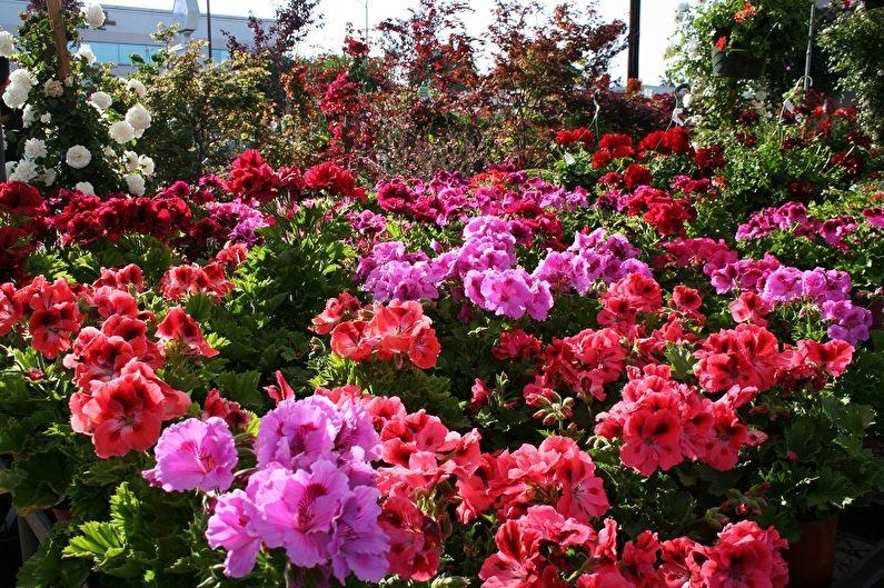 Пора сажать цветы: лаванда, горечавка и другие растения, рассаду которых выращивают с января