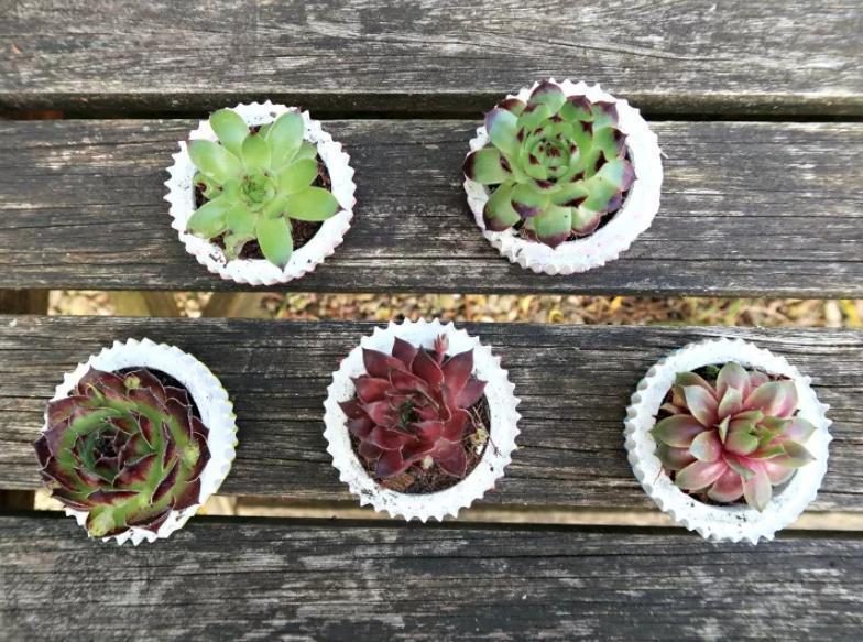 Бетонные  кексики  для цветов своими руками: мастерим милые горшочки для комнатных цветов