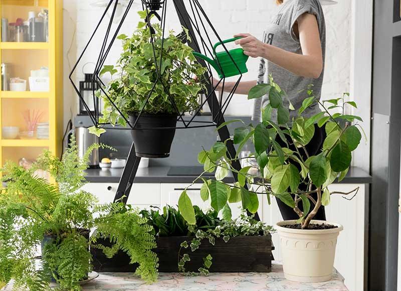 Простые советы по уходу за комнатными растениями: почему надо положить в горшочки корицу. Пропорции полезных растворов