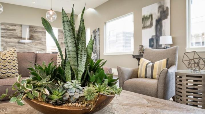 Ваза из синего стекла и еще 6 вещей, которые помогут обезопасить дом от негатива по принципам фэн-шуй