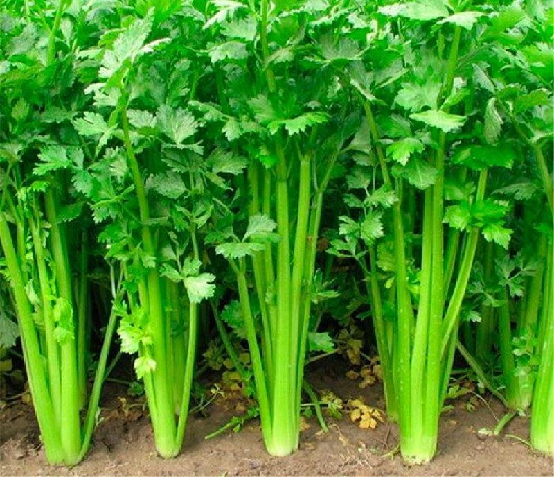 Посевной календарь: в какие дни лучше сеять семена на рассаду в марте
