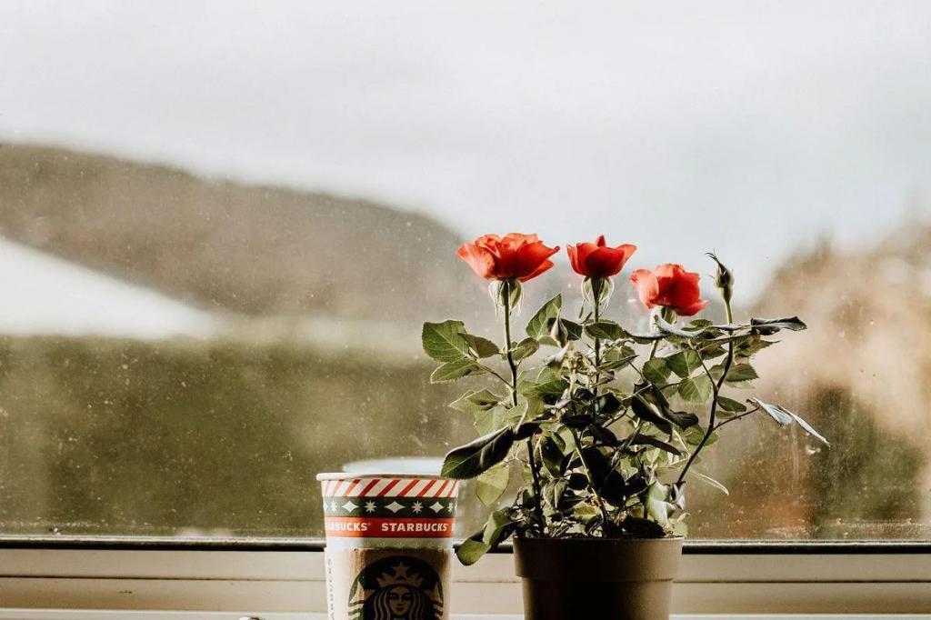 Просто деньги на ветер: 5 капризных растений, приобретенных в магазине, которые часто погибают после покупки