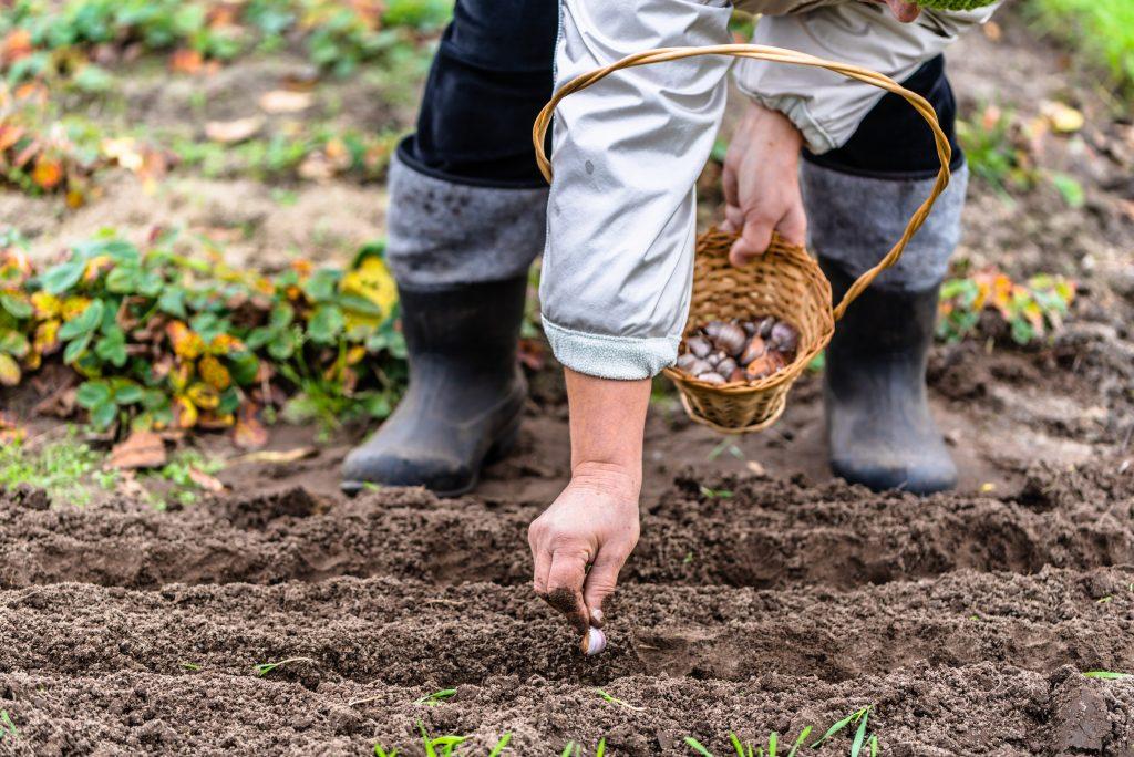 Ранние посадки: какие культуры нужно посадить в огороде в первую очередь (не только редис)