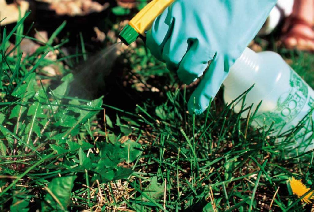 Двор и сад будут чистыми: делаем