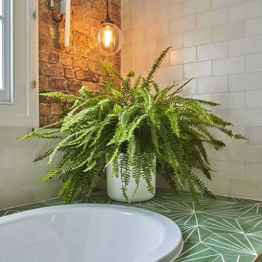 Бегония и нефролепис: какие цветы подходят для украшения ванной комнаты