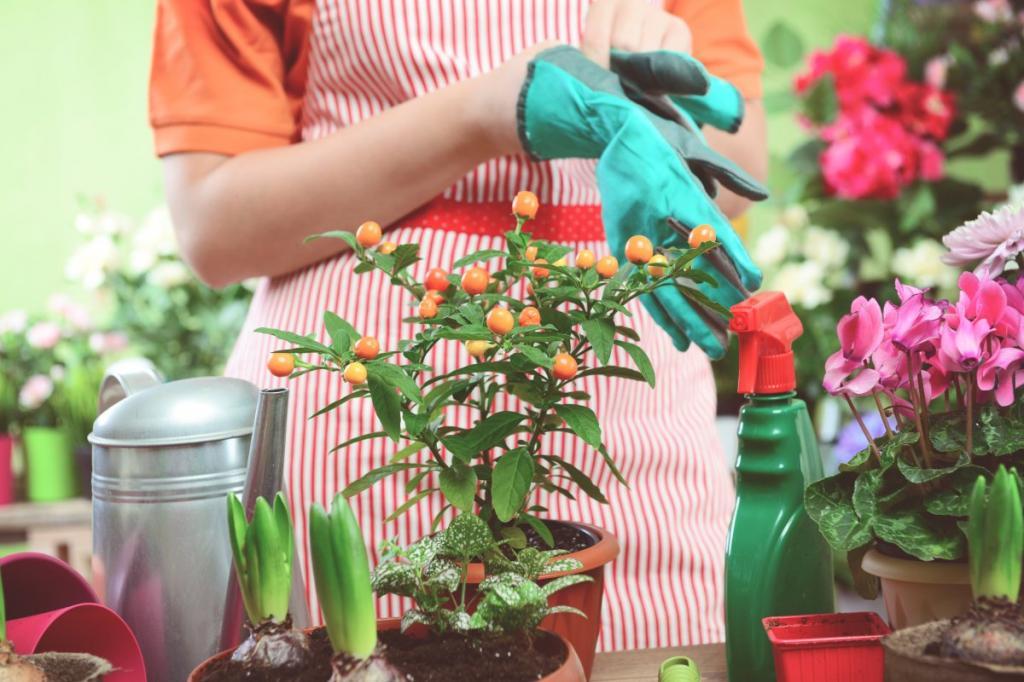 Очищаем садовый инвентарь, горшки, удобряем и даже отваживаем муравьев: зачем запасаться уксусом в начале дачного сезона