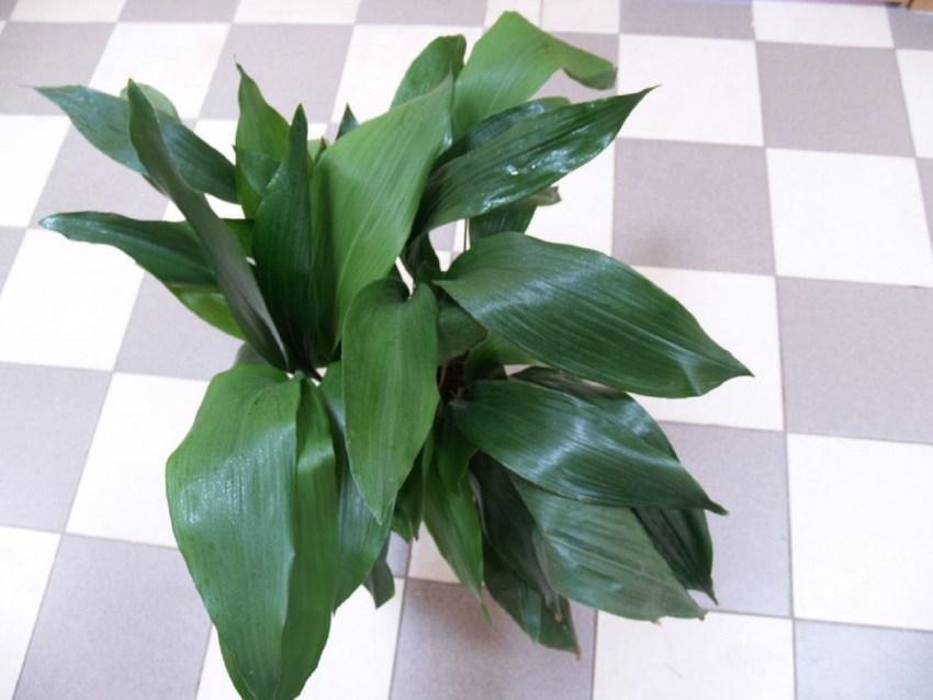 Удивительно, но некоторые растения лучше всего выращивать в ванной комнате