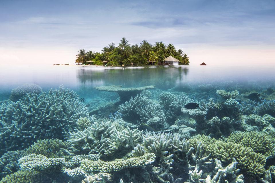 К 2050 году на планете может остаться всего 6 % коралловых рифов