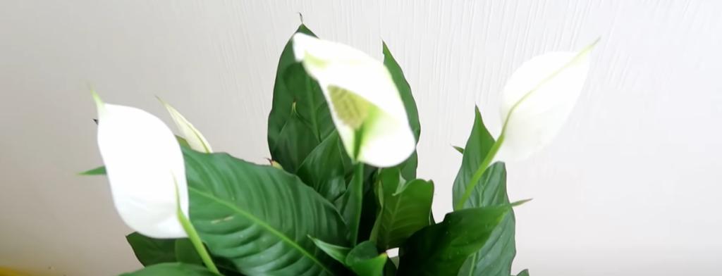 Заберите с собой остатки костра: от одной столовой ложки растения выпустят пышные бутоны