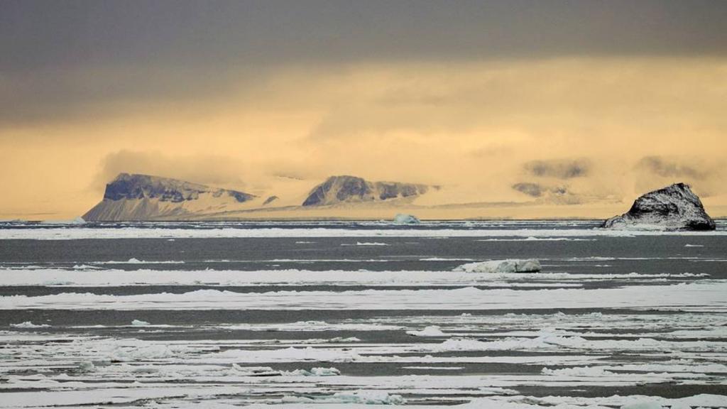Они могут ходить! Ученые наткнулись на необычные виды морских губок у берегов России