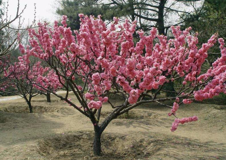 Обильное цветение деревьев не дает гарантию хорошего урожая: 5 причин, почему не появляются завязи