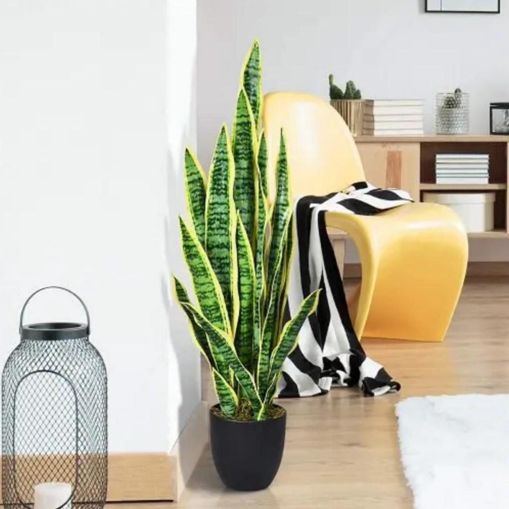 Каждому созвездию свое растение. Что стоит посадить в доме согласно знаку зодиака