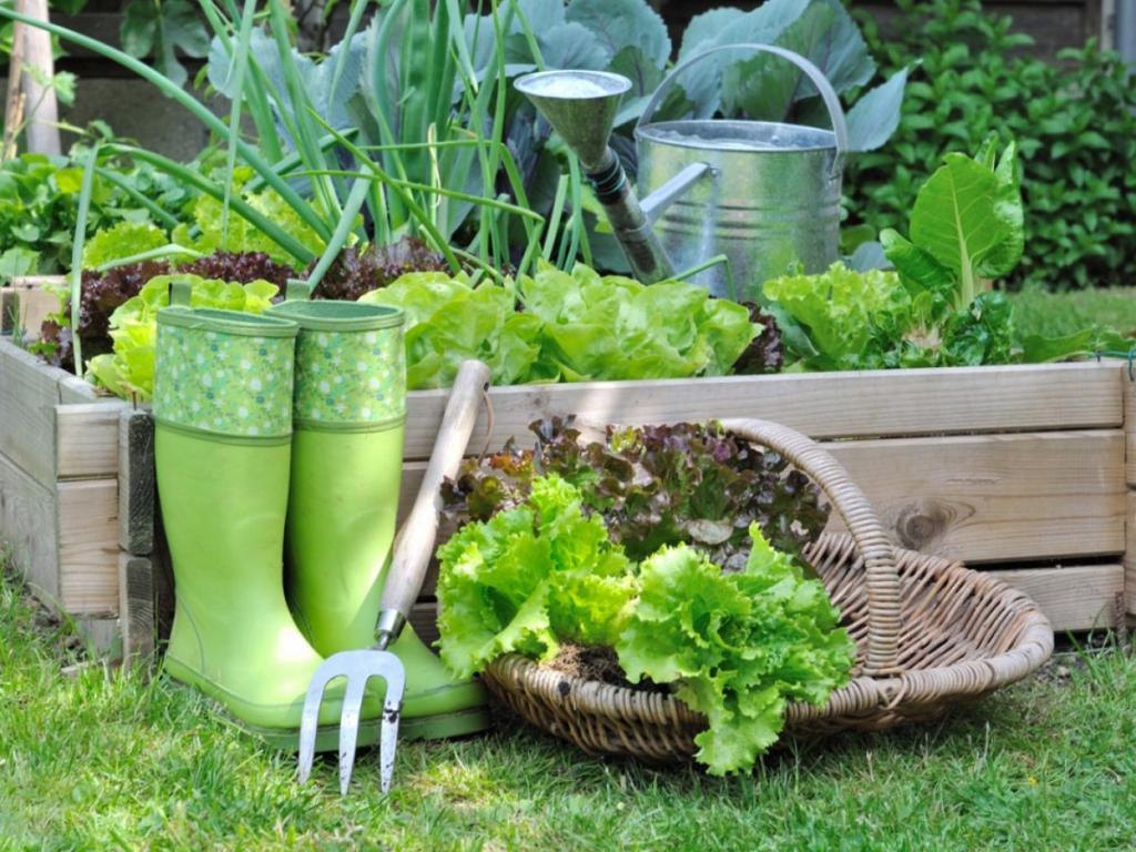 Редис, капуста и не только: какие овощи и зелень можно посадитьв августе