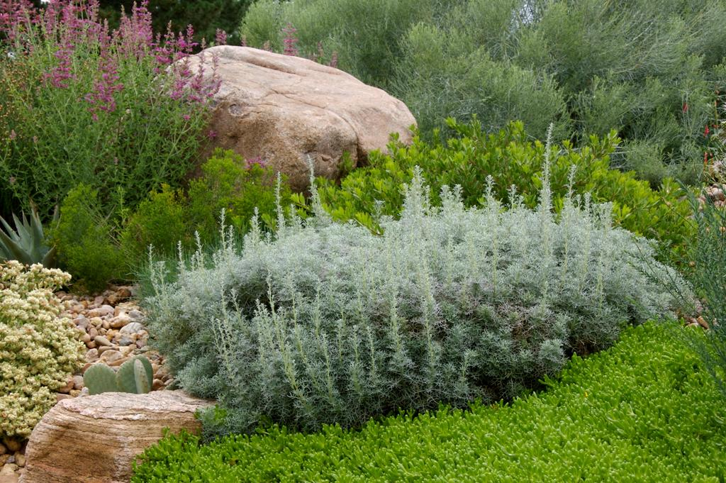 Осы и близко не подлетят к вашему саду: какие растения нужно посадить для защиты (мало того, что защищают, так и смотрятся красиво)