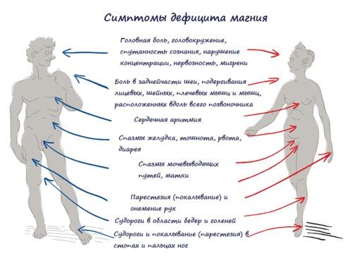 УДИВИТЕЛЬНАЯ роль магния в организме человека