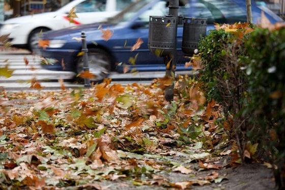 Опавшие листья превратят в органические конденсаторы