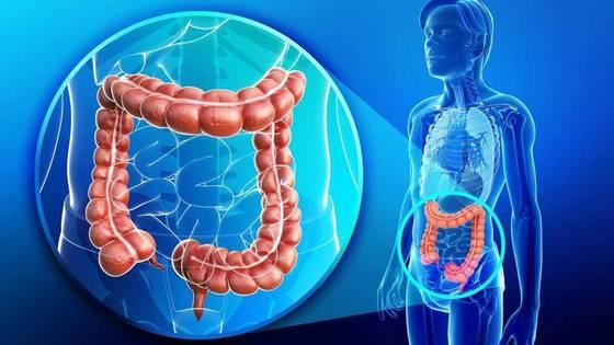 Лучшие продукты для здоровой микрофлоры кишечника