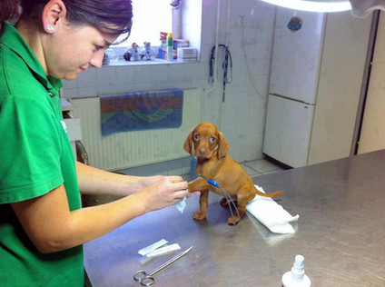Без прикрас: Как на самом деле выглядят будни ветеринара