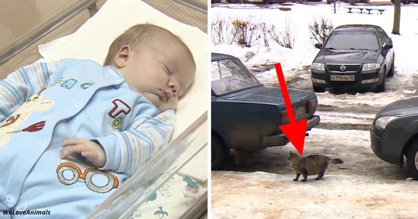 Малышку бросили замерзать в подвале.  Но смотрите, что сделала кошка Маша
