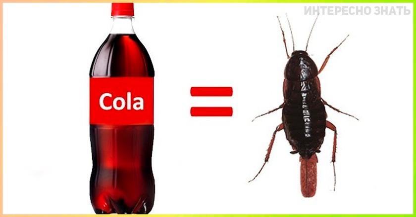 Секретный ингредиент Кока Колы, узнав о котором, вы перестанете ее пить
