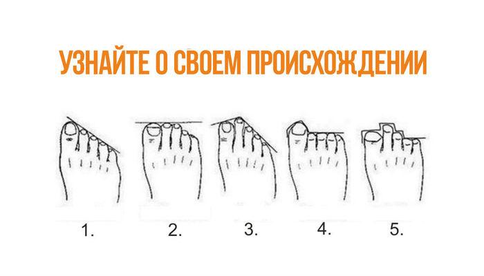 По расположению пальцев на ногах можно узнать, кем были твои предки