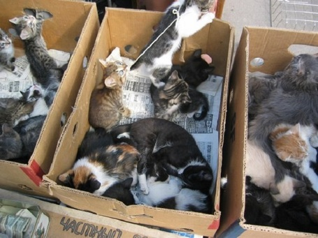 Конвейер смерти, или Смерть в коробке. Жуткая правда о бездушном бизнесе тётушек с котятами.