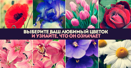 Выберите цветок и узнайте о себе кое что интересное