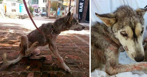 Наасфальте лежала полуживая собака, скрывая подживотом самое ценное сокровище