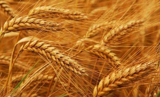 11 способов, которыми глютен и пшеница могут навредить здоровью