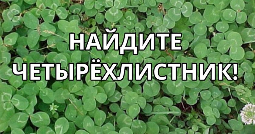 Если сможете найти 4 листный клевер за 1 минуту, ваше желание исполнится!