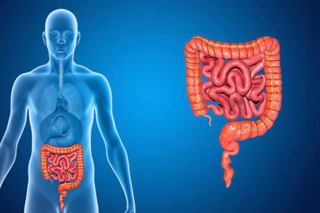 «Дырявый кишечник»: Патологические процессы при синдроме повышенной кишечной проницаемости