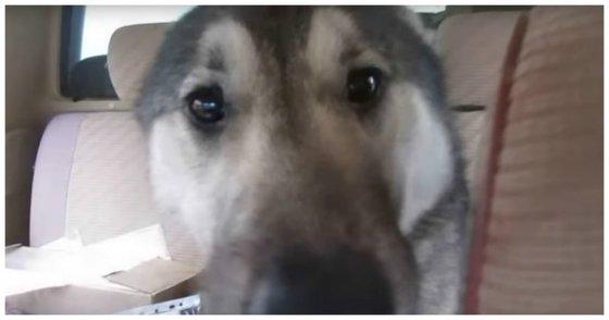 Этовидео встречи хозяина ипотерявшейся собаки сделает вашдень лучше