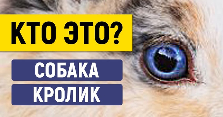 Тест: Сможете ли вы узнать животное по глазам?