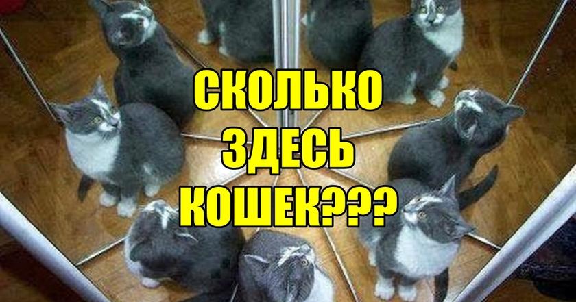 Сколько кошек на фото? С первого раза не может угадать НИКТО!